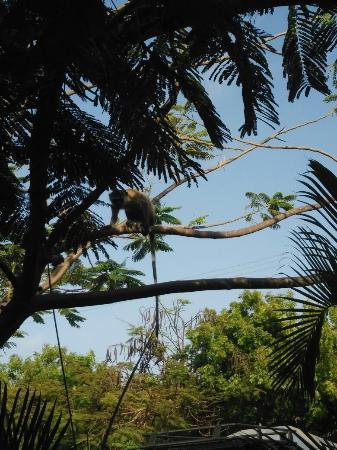Papatuo Villas Resort: IMG_20160122_163125_large.jpg