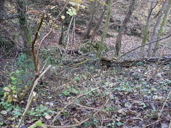 Riserva Naturale Regionale Selva del Lamone: Lamone