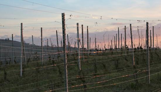 Quaranti, Italie : colline del territorio...