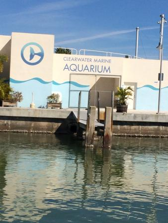 Picture Of Clearwater Marine Aquarium