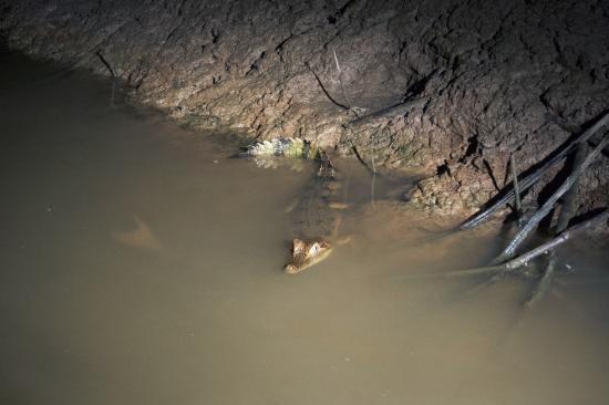 Tapiche Reserve: The animals