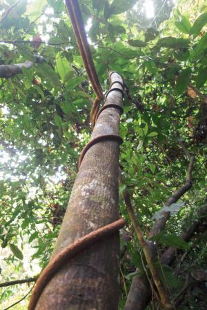 Tapiche Reserve: The Jungle