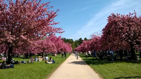 Super endroit pour le pique nique photo de parc de sceaux sceaux tripadvisor - Greffe du cerisier au printemps ...