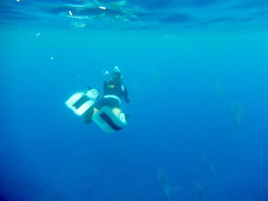 Honaunau, Havaí: Me swimming right above the dolphins!