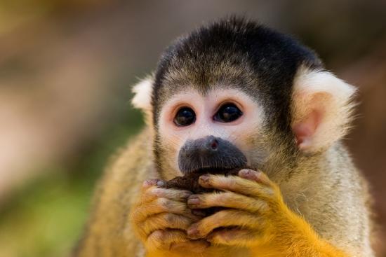 Λα Φορτούνα ντε Σαν Κάρλος, Κόστα Ρίκα: Squirrel Money, Costa Rica