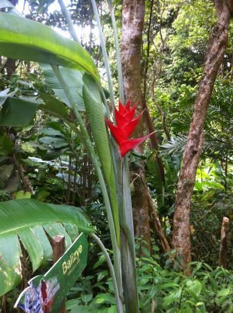 Barre de L'Isle Trail: A few flowers on this trail