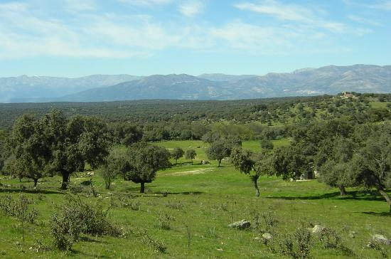 Complejo Rural Los Jarales: la finca