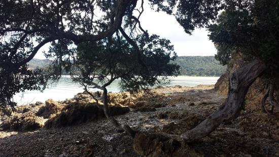 Waiheke Adası, Yeni Zelanda: Rocky shorelines