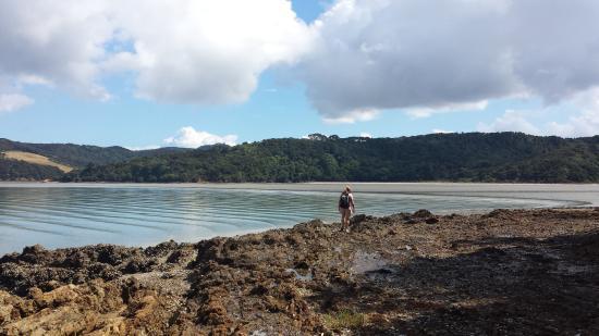 เกาะไวเฮเก, นิวซีแลนด์: Remote Te Matuku Bay