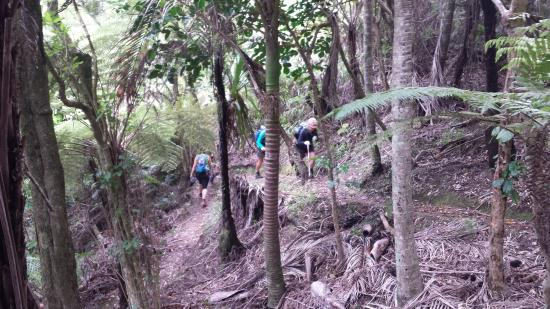 Isla Waiheke, Nueva Zelanda: Trails through the Nikau forest