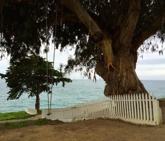 Point San Luis Lighthouse A Swing Hangs From An Old Eucalyptus Tree