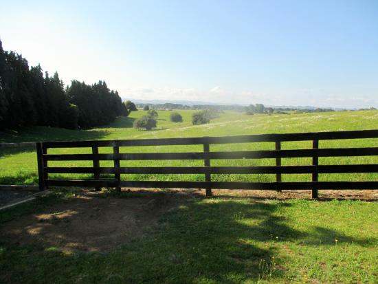Otorohanga and Waitomo Motels: this was the view from our suite