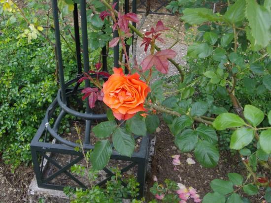 Jardin botanique du montet photo de jardin botanique du for Bd du jardin botanique 50
