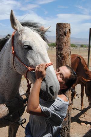 Cogollos de Guadix, España: amor hacia los caballos