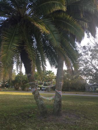Knights Inn Sarasota: photo5.jpg