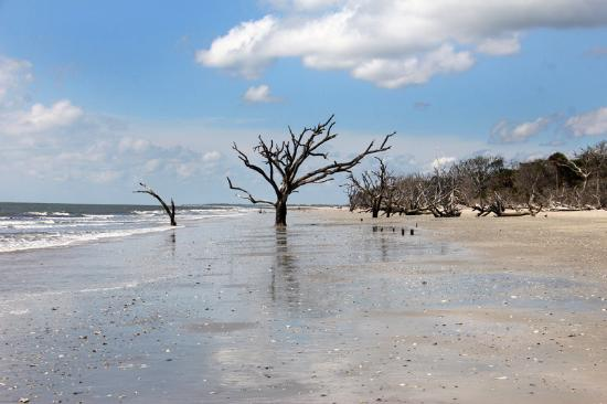 Low Tide At Botany Bay Picture Of Plantation Heritage Edisto Beach