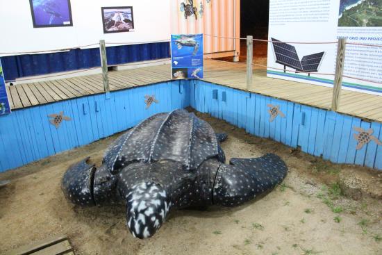 Aberto da Tartaruga Marinha de Fernando de Noronha Museum