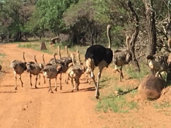 Kwalata Game Lodge in Dinokeng Game Reserve Map - Tshwane ...