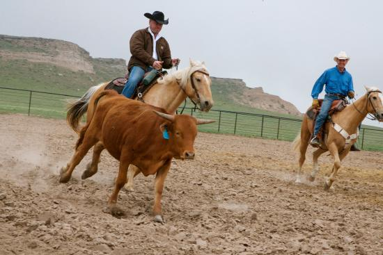 New Raymer, CO: Team penning