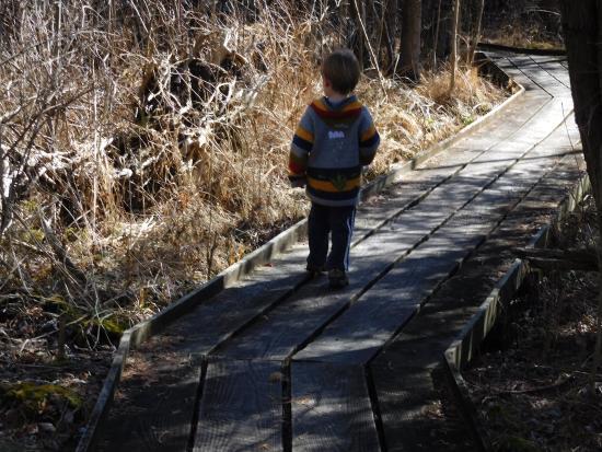 Cedar Bog State Nature Preserve