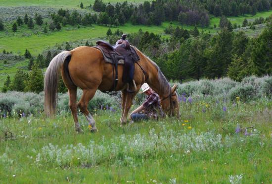 Bonanza Creek Guest Ranch: Enjoying life in a field of wild flowers