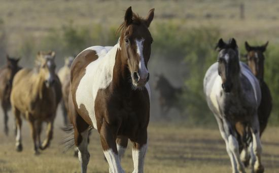 Bonanza Creek Guest Ranch : Bonanza Creek horses
