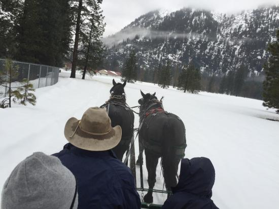Icicle Outfitters Winter Sleigh Ride: The ride is about 30 min on the property by the creek.Beautiful scenery!
