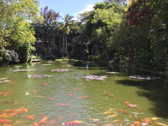 Belle balade picture of jardin botanique de deshaies for Jardin botanique 78