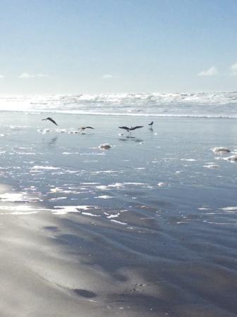 Long Beach, واشنطن: birds abound