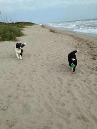 Jensen Beach, FL: The furry kids having a blast at the beach!