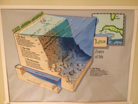 Cayman Islands National Museum : como se conforman sus playas y geografia