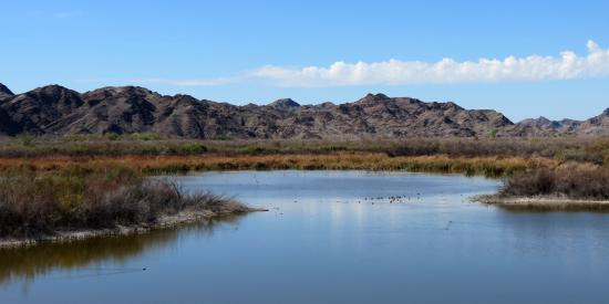Imperial National Wildlife Refuge: McAllister Lake at the end of Mesquite Point