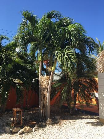 Villa Punta Salina: outdoor shower