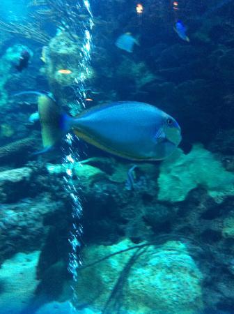 Aquarium Picture Of Saltwater Grill Panama City Beach