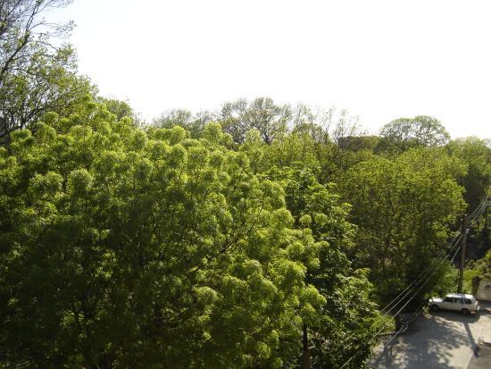 Central Park Guest Rooms