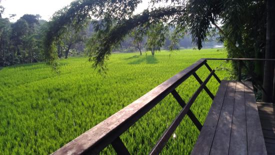 Flameback Lodges: View from Paddy villa....