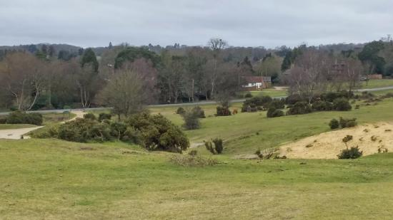 Forest Side Guesthouse: Heathland across the road from Temple Lodge