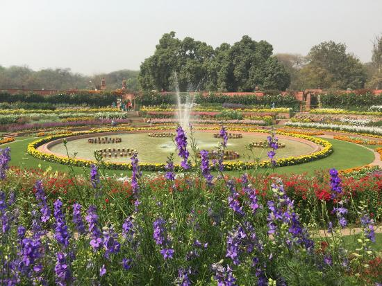 Beautiful dahlia billede af mughal garden new delhi Mughal garden booking