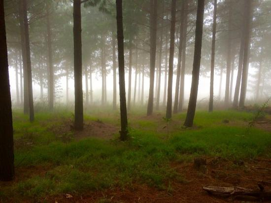 The King's Lodge: Forrest in Hogsback