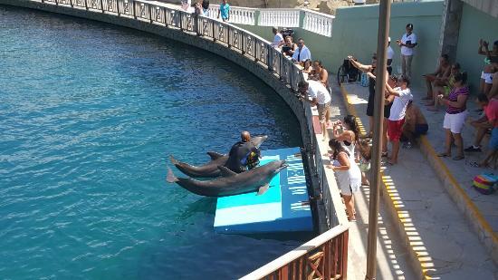 Ocean world adventure park and casino mequite nv casino