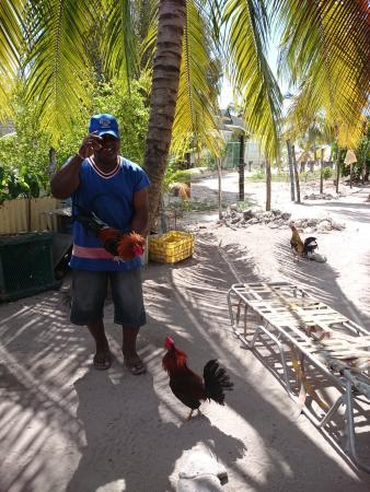 Bayahibe, Republik Dominika: coq de combat - un vrai Dominicain se doit d'en avoir un :-)