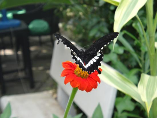 Butterflies Garden Restaurant: Nice butterfly