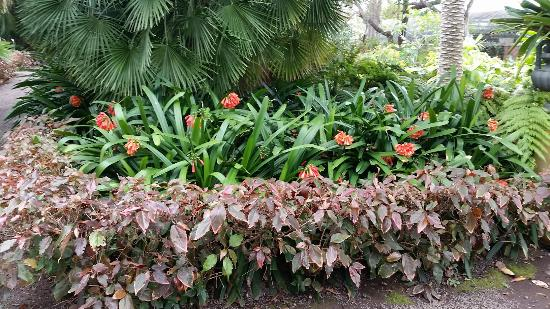 20160210 133900 picture of botanical gardens jardin botanico puerto de la cruz - Botanical garden puerto de la cruz ...