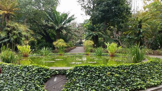 20160210 134054 picture of botanical gardens jardin botanico puerto de la cruz - Botanical garden puerto de la cruz ...