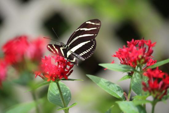 Nature Coast Botanical Gardens Nursery Beautiful Flowers And Butterflies