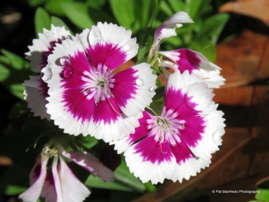 Nature Coast Botanical Gardens Nursery Morning Dew On The Flowers