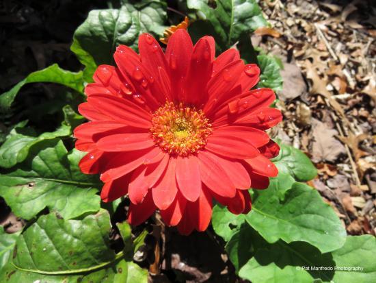 Nature Coast Botanical Gardens Nursery Beautiful Flowers