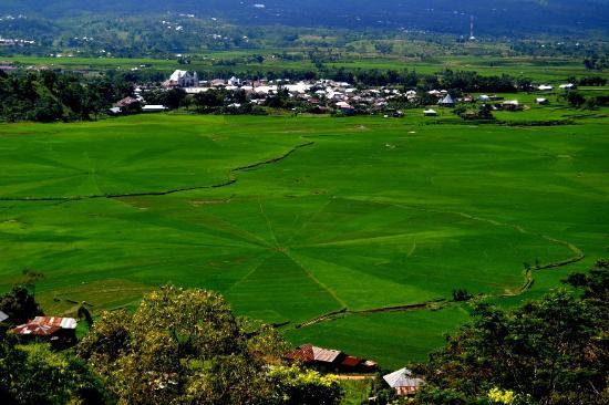 """Lingko Spider Web Rice Fields - Walking Tours: Lingko """"spider"""" Meler di lihat dari Golo Timur"""