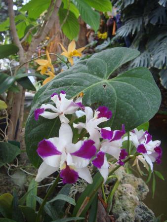 Expo mille et une orchidées sous les grandes serres du jardin des ...
