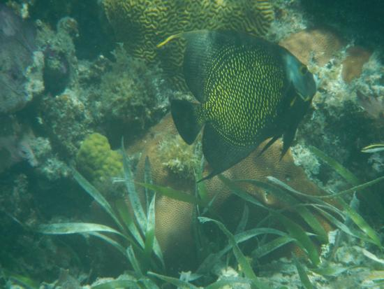 Long Caye Resort: Snorkeling was excellent!